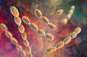 Infezione da Haemophilus ducreyi