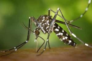 West Nile virus: prevenzione, diagnosi e trattamento