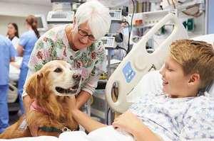 Com'è nata la Pet therapy