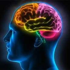 Cibi che possono danneggiare il cervello: 7 Consigli